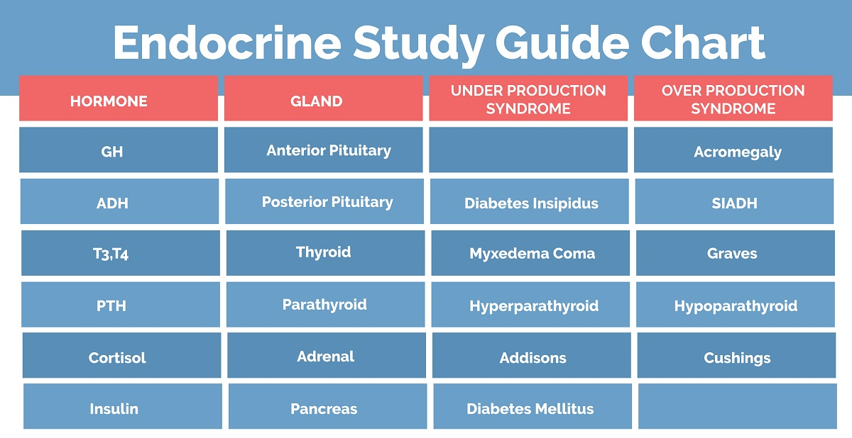 endocrine system study guide nclex quiz rh nclexquiz com endocrine study guide diagram endocrine study guide for nclex