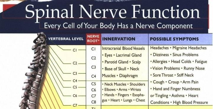 Spinal Nerve Function Chart - NCLEX Quiz