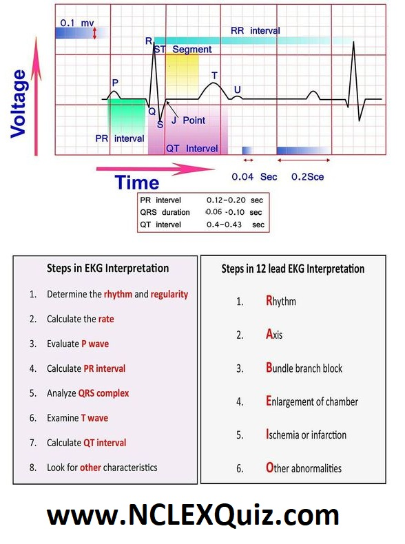 10 Steps to Learn ECG Interpretation